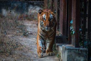 National Zoological Park Delhi Nearest Metro Station